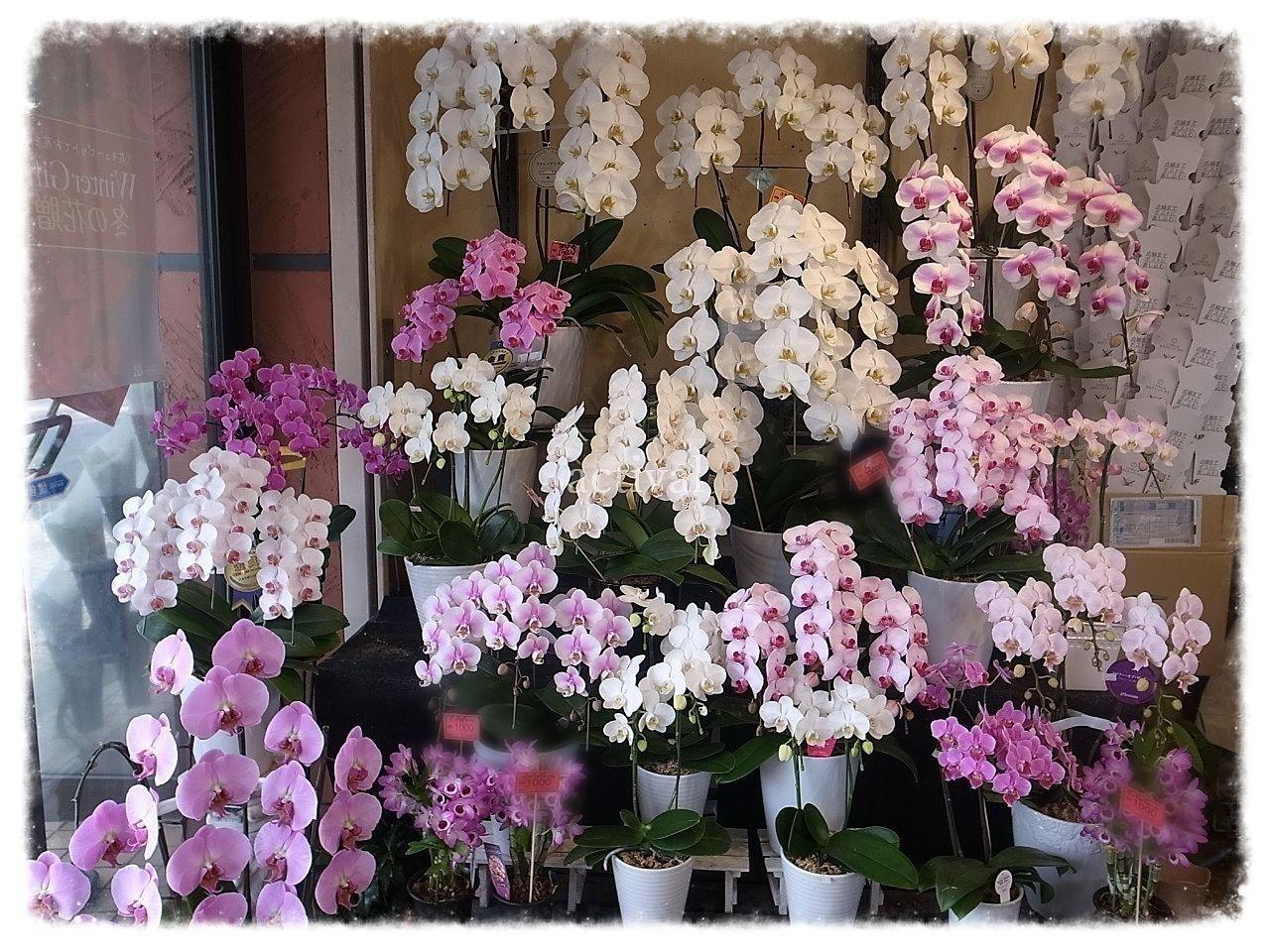 街のお花屋さん くろだ生花店のご紹介