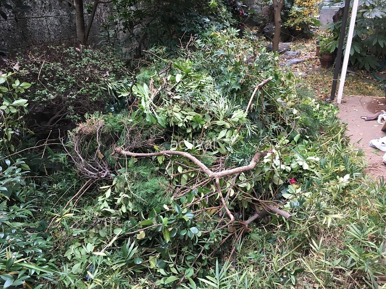 川口市のオーナーさん自宅庭の越境している木や枝を切る作業をしました!!