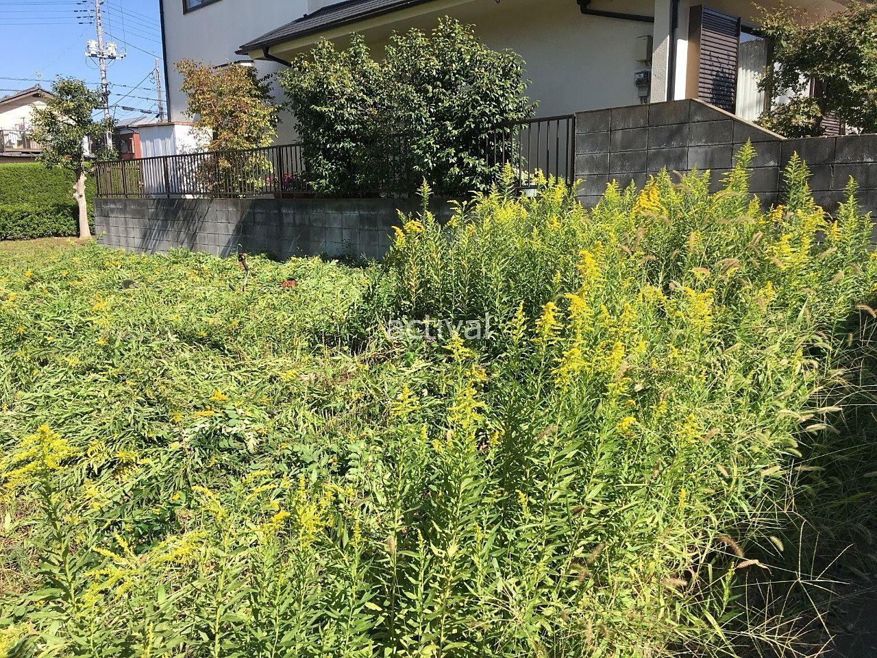 土地にはこのように雑草が生えています!