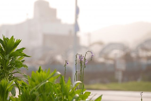建物を解体した後の土地(更地)には雑草がよく生える!? ~不動産売却での事例㉕~