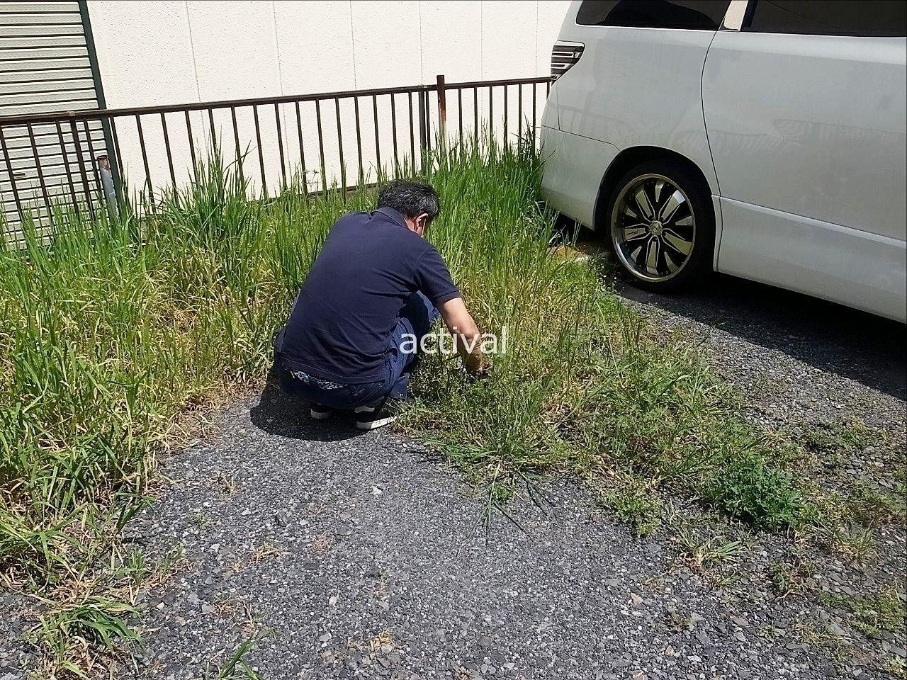上司N島部長が駐車スペースの草を手で取りました!