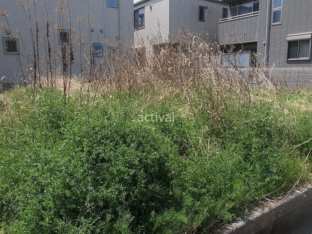 草が伸び放題になっている空き地です!