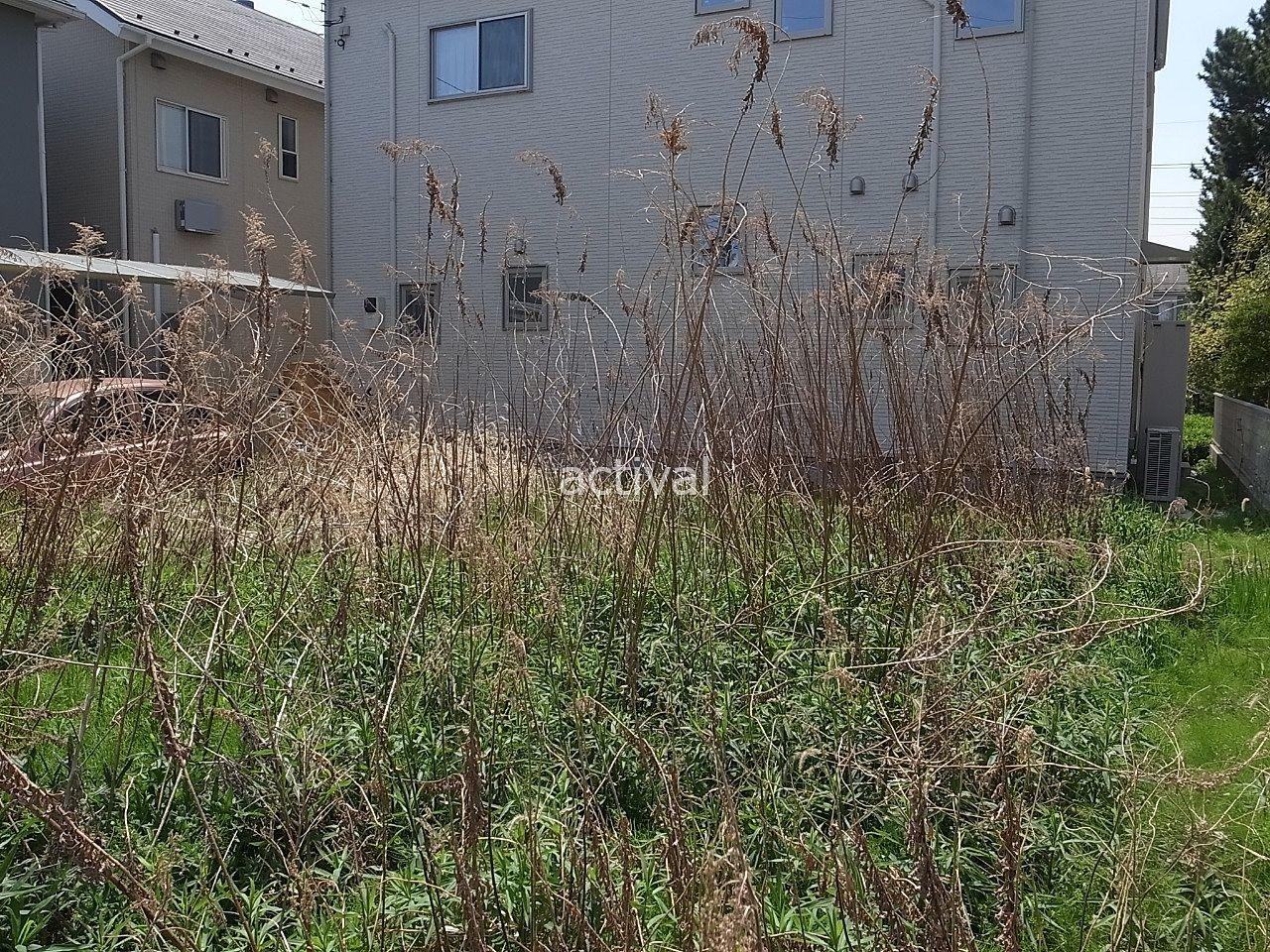 空き地には枯れている草も一部あります!