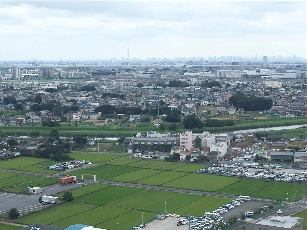 遠くには東京スカイツリーが見えます!