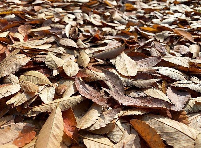 空き家の外回り点検業務~落ち葉の掃除~