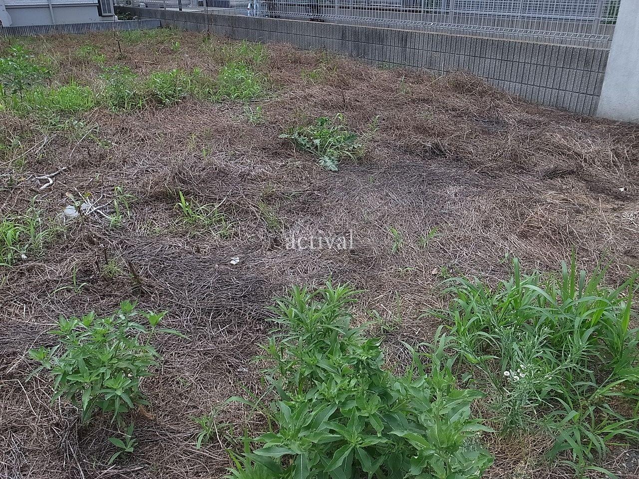 前回の除草剤がよく効いていて多くの雑草が枯れていました。