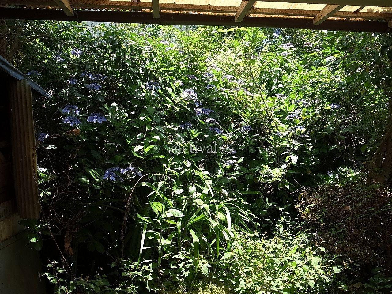 空き家の庭の草木が生い茂っていました。