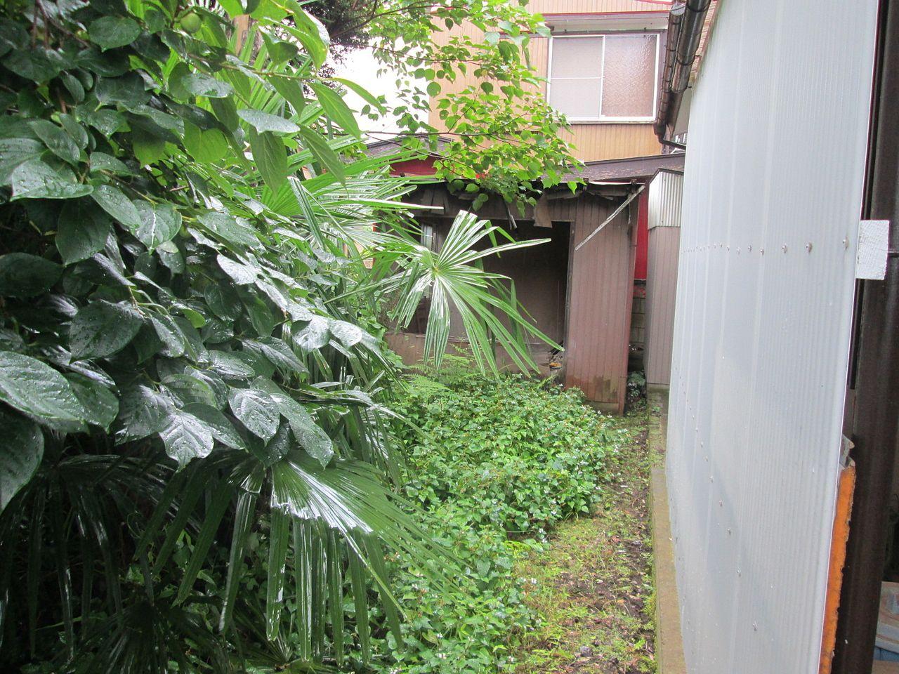 空き家の庭は雑草や樹木が生い茂っていました