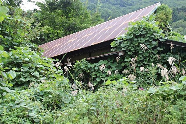 何十年も放置した空き家がジャングル化した!? ~空き家の売却で実際にあった事例⑲~