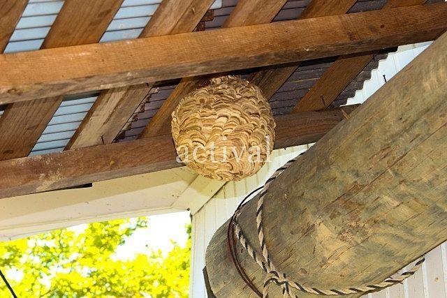解体時に発見?空き家の庭にオオスズメバチの巣が! ~空き家の売却で実際にあった事例㉒~