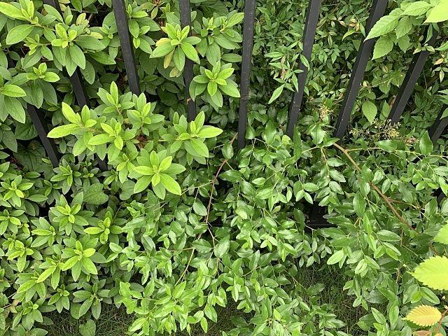 空き家の庭木の越境が原因でお隣とトラブルに ~空き家の売却で実際にあった事例㉕~