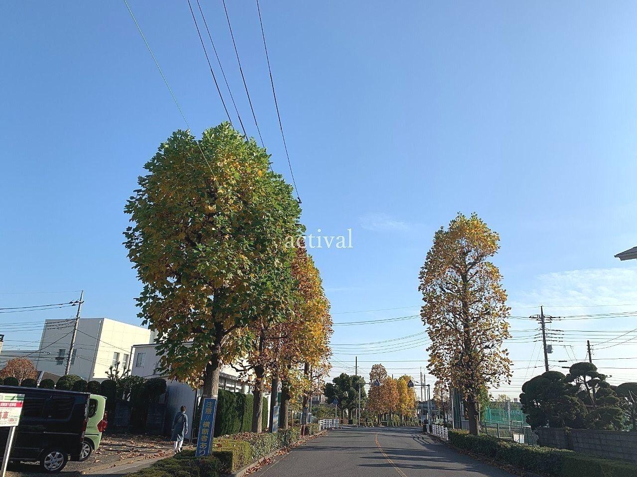 越谷市立富士中学校付近の街路樹です。
