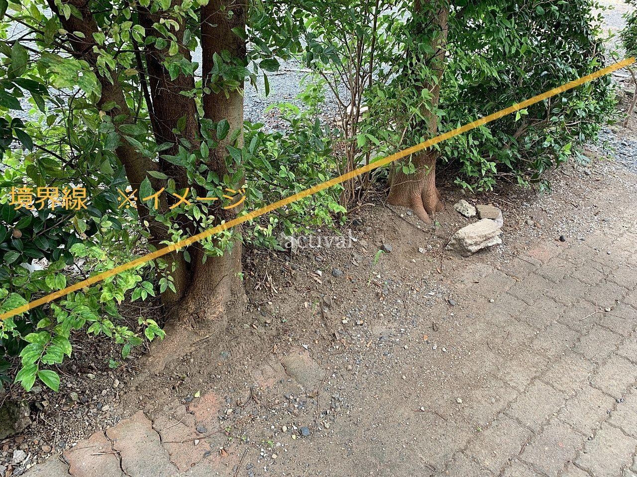 木は駐車場の境界の外側にありました。