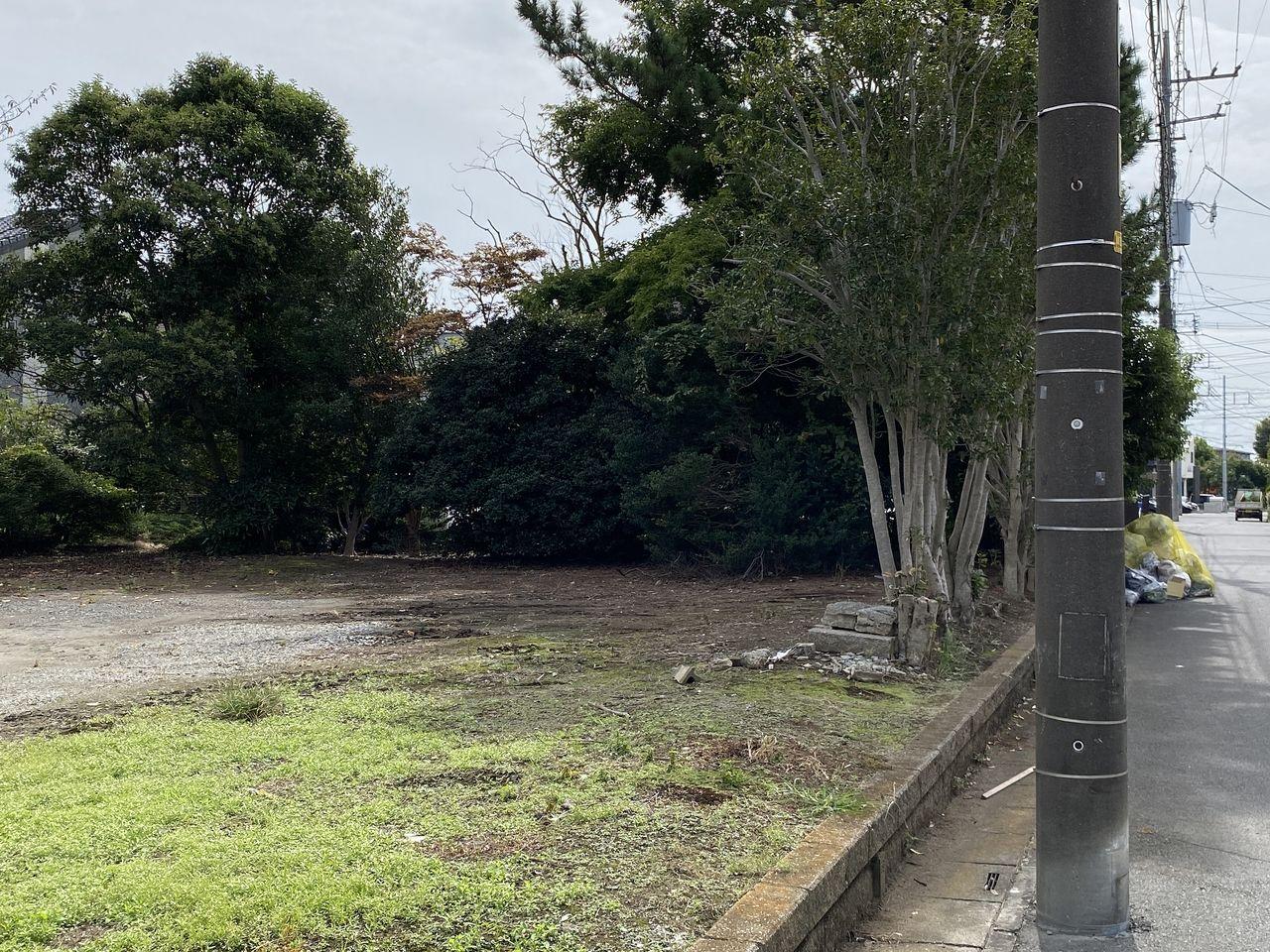 管理している月極駐車場側から見た木の様子です。