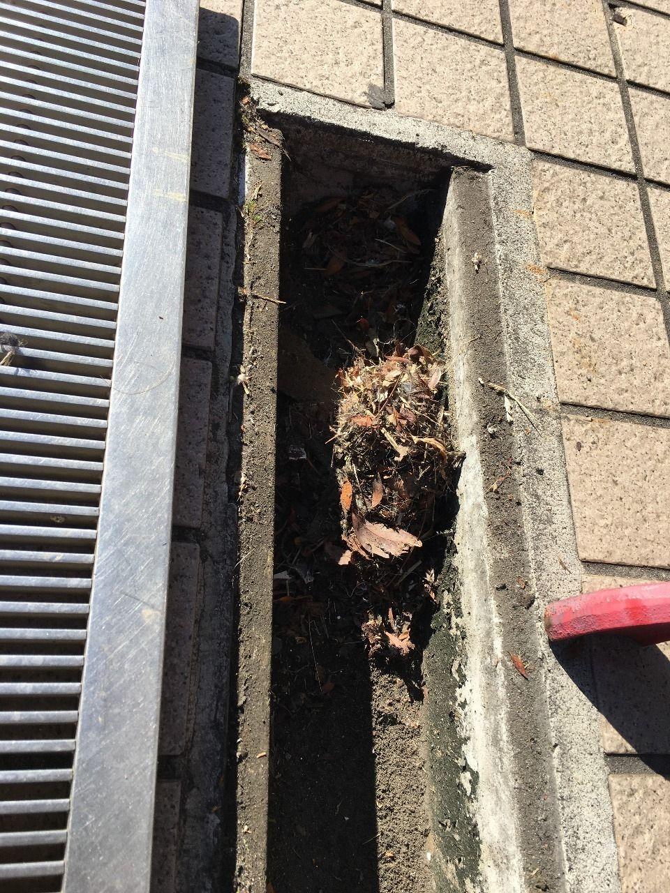 敷地内にある排水溝に溜まったゴミです!