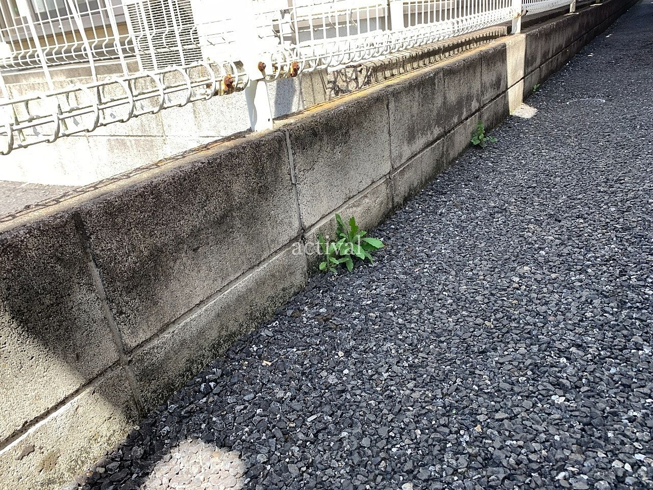 ア・ス・ヴェルデ敷地内に生えた雑草です。