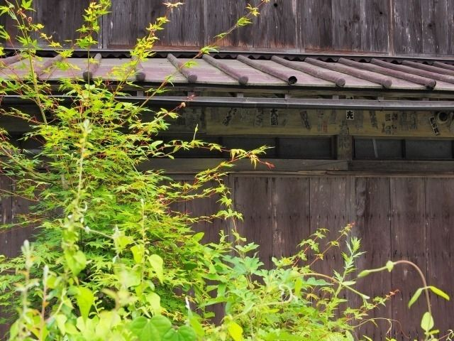 樹木の越境と近隣トラブル ~空き家の売却で実際にあった事例②~