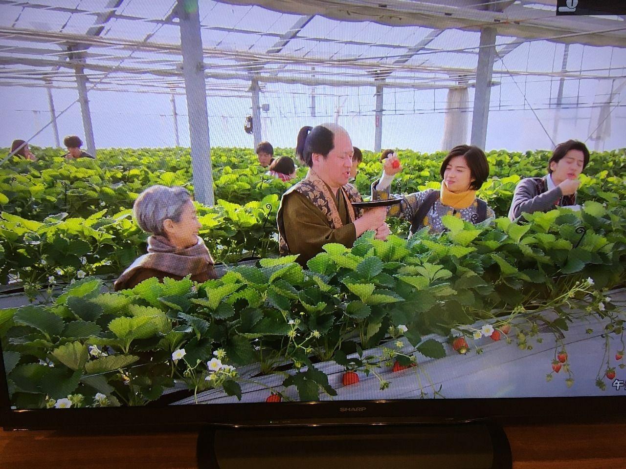 越谷サイコーのドラマにはイチゴも紹介されました!!