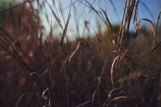 月極駐車場の雑草対策⑰ ~秋の雑草対策と除草作業~